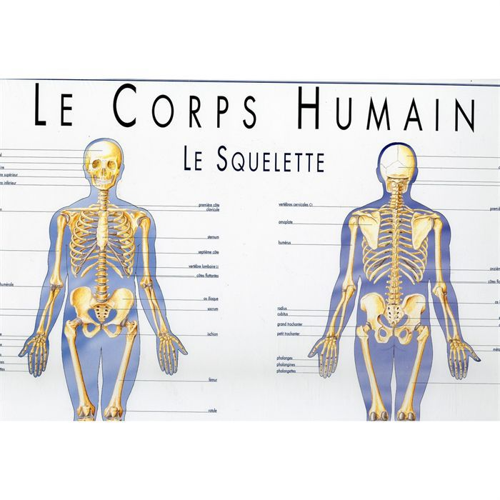 pin pin le squelette humain anatomie humaine poster corps. Black Bedroom Furniture Sets. Home Design Ideas