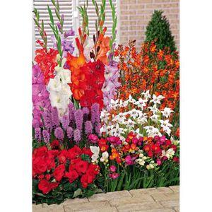 bulbes de fleur achat vente bulbes de fleur pas cher cdiscount. Black Bedroom Furniture Sets. Home Design Ideas