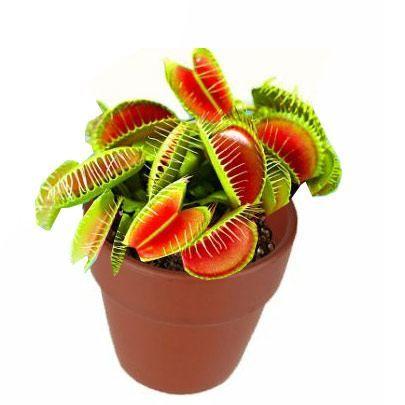 Mini plante carnivore gadget original achat vente for Achat plante