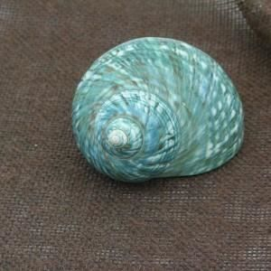 Sun d koh coquillage onem turquoise 9 5 cm achat for Objet deco turquoise
