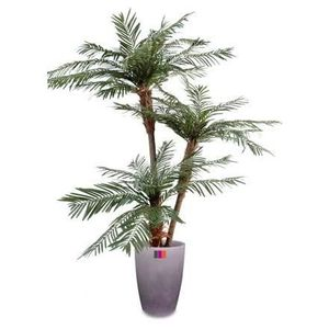 Plante palmier achat vente plante palmier pas cher for Palmier artificiel moins cher
