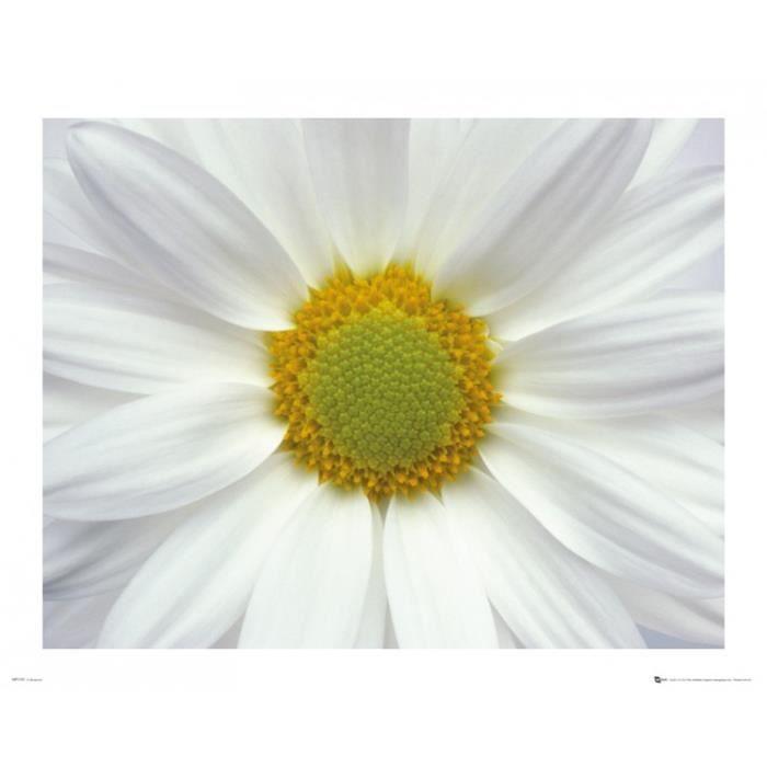 fleurs mini poster daisy 40 x 50 cm achat vente affiche cdiscount. Black Bedroom Furniture Sets. Home Design Ideas