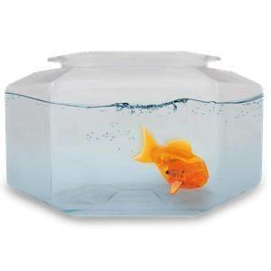 Silverlit poisson robot et son aquarium achat vente for Jouet aquarium poisson