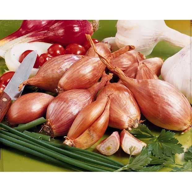 Echalote 39 jermor 39 type cuisse de poulet achat vente graine semence echalote 39 jermor - Echalote cuisse de poulet ...