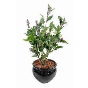 plante sauge achat vente plante sauge pas cher cdiscount. Black Bedroom Furniture Sets. Home Design Ideas