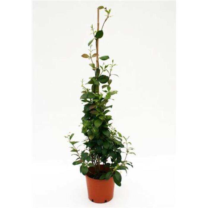 Plantes de jardin achat vente plantes de jardin pas for Achat plante jardin