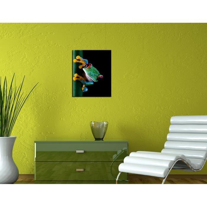 bilderdepot24 toile sur ch ssis bois rainette 70x50 cm 1 pi ce achat vente tableau. Black Bedroom Furniture Sets. Home Design Ideas