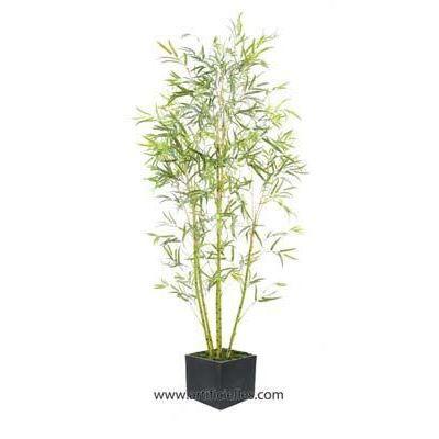 Bambou exterieur 195 cm cannes vertes en pot ar achat for Chauffage plante exterieur