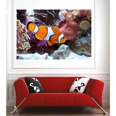 affiche poster d coration murale poisson clown r f 60943357 6 dimensions d clinaisons papier. Black Bedroom Furniture Sets. Home Design Ideas