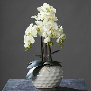 orchidee en pot achat vente orchidee en pot pas cher soldes cdiscount. Black Bedroom Furniture Sets. Home Design Ideas