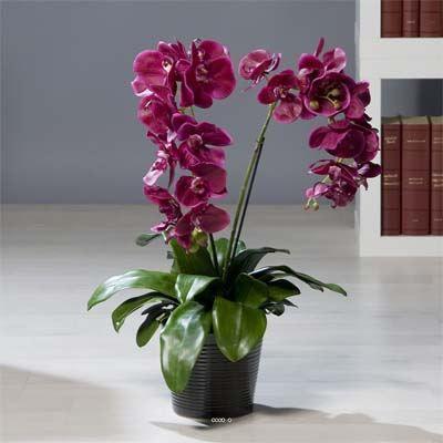 orchidee artificielle fuchsia 2 hampes en pot p achat vente fleur artificielle s ch e. Black Bedroom Furniture Sets. Home Design Ideas
