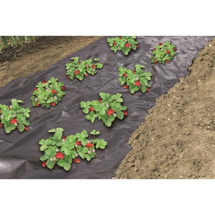 Film de paillage sp cial fraises 1 40x20m achat - Bache noire jardin ...