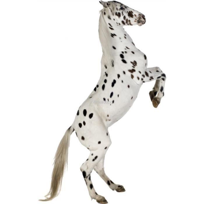Sticker cheval noir et blanc dimensions 76x120cm achat vente stickers cdiscount - Stickers muraux noir et blanc ...