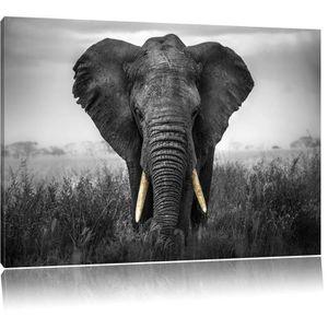 Tableau elephant noir et blanc achat vente tableau elephant noir et blanc - Tableau noir et blanc pas cher ...