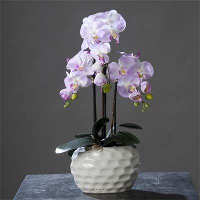 Orchidee artificielle lavande 3 hampes en pot c achat vente fleur artificielle cdiscount - Arrosage orchidee en pot ...