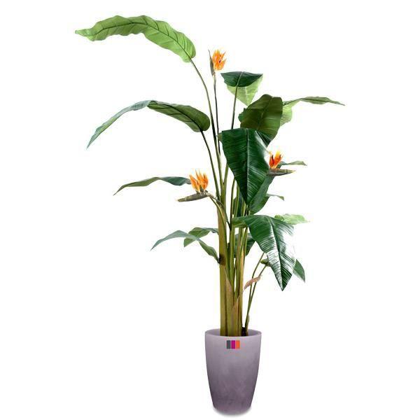 Strelitzia 200cm plante artificielle achat vente fleur artificielle cdiscount for Plante 90 cm