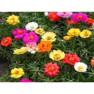 graines fleurs achat vente graines fleurs pas cher soldes cdiscount. Black Bedroom Furniture Sets. Home Design Ideas