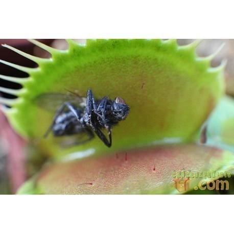 Plantes achat vente plantes pas cher cdiscount for Achat plante