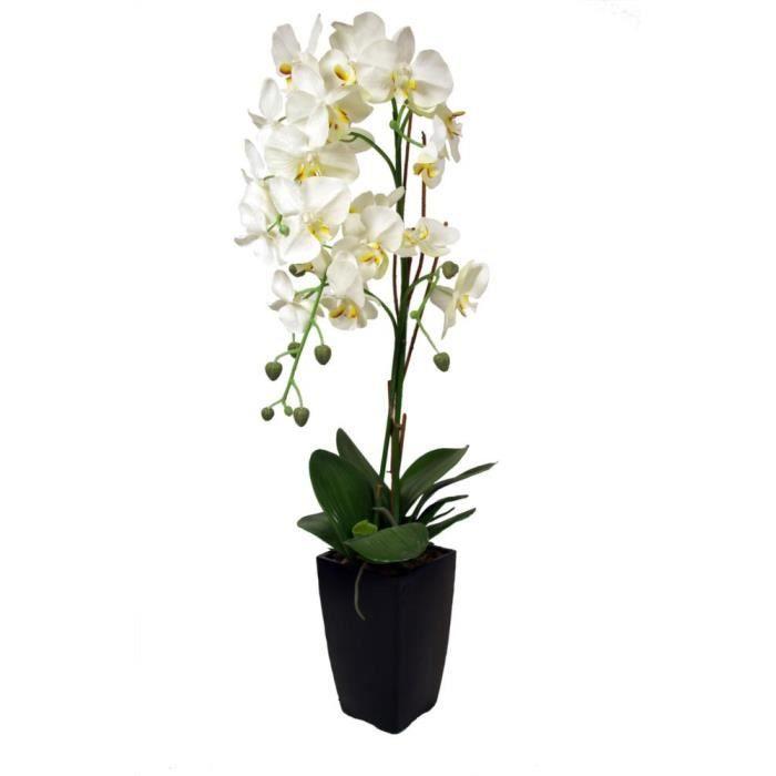 orchid e blanche en pot noir achat vente plante. Black Bedroom Furniture Sets. Home Design Ideas