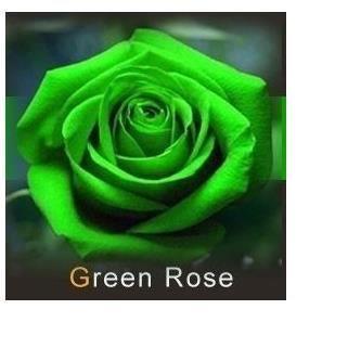 20 graines de rose rosiers couleur vert achat vente graine semence 20 graines de rose. Black Bedroom Furniture Sets. Home Design Ideas