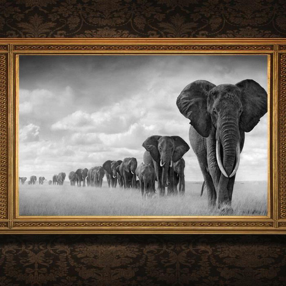 poster afrique achat vente poster afrique pas cher les soldes sur cdiscount cdiscount. Black Bedroom Furniture Sets. Home Design Ideas
