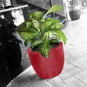 Pot de fleur interieur rouge achat vente pot de fleur for Pot rouge exterieur