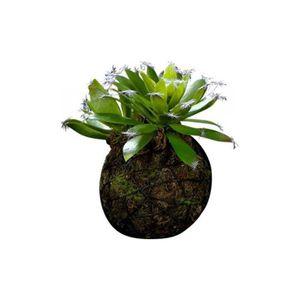 suspension pour plantes achat vente suspension pour. Black Bedroom Furniture Sets. Home Design Ideas