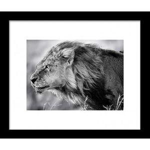 Image encadr e lion b and w 28x33 cm gris achat vente for Image encadree decoration