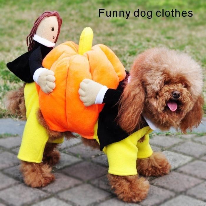 V tements dr les d 39 animaux manteau de chien de citrouille - Videos droles d animaux ...