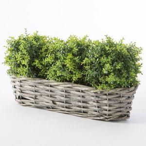 Plante de bui achat vente plante de bui pas cher les for Boule de buis artificiel pour exterieur