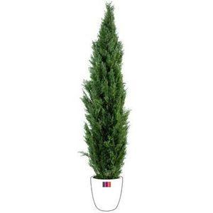 Plante verte d exterieur achat vente plante verte d for Plante exterieur maison