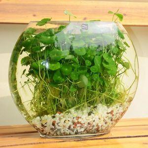 plantes achat vente plantes pas cher les soldes sur. Black Bedroom Furniture Sets. Home Design Ideas