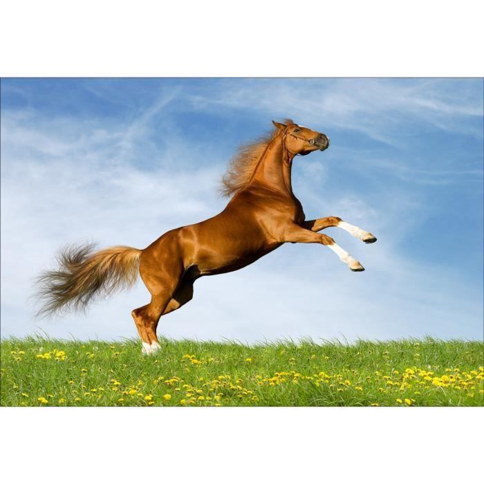 Stickers muraux d co cheval qui saute dimensions - Cheval qui saute dessin ...