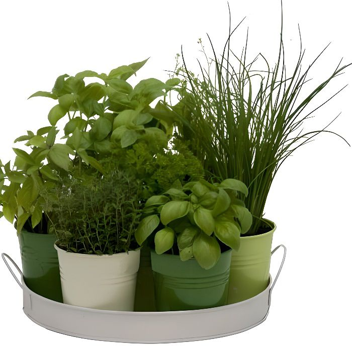 Plateau 7 Herbes Aromatiques Achat Vente Plante
