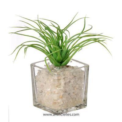 Plante depolluante pour la maison maison design for Plante maison