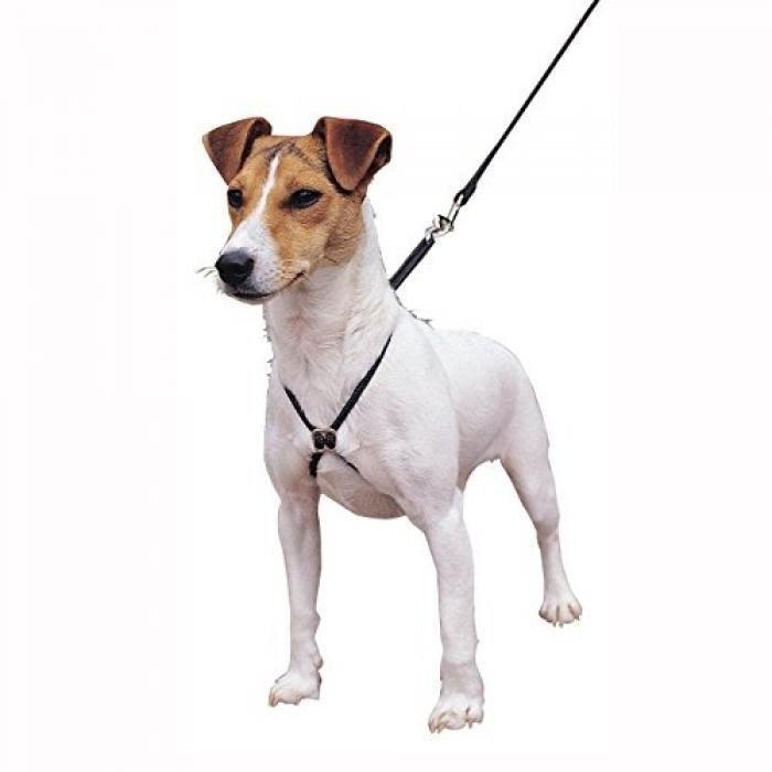 Harnais de dressage chien - Achat / Vente Harnais de