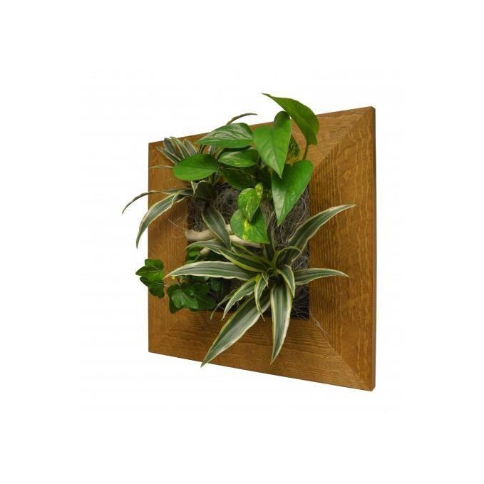 tableau v g tal mural eros vieux bois 31x31 achat vente plantes stabilis es cdiscount. Black Bedroom Furniture Sets. Home Design Ideas