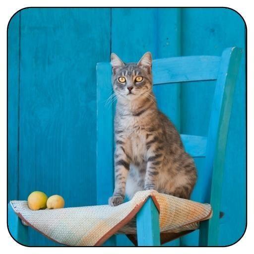 dessous de verre carr chaton tigr de chat sur une chaise bleue achat vente sous verre. Black Bedroom Furniture Sets. Home Design Ideas