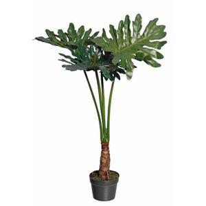 PLANTE POUSSÉE Sellum philo 4 branches en pot