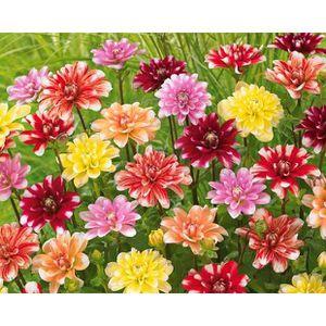 bulbes graines de fleurs achat vente bulbes graines de fleurs pas cher cdiscount page 32. Black Bedroom Furniture Sets. Home Design Ideas