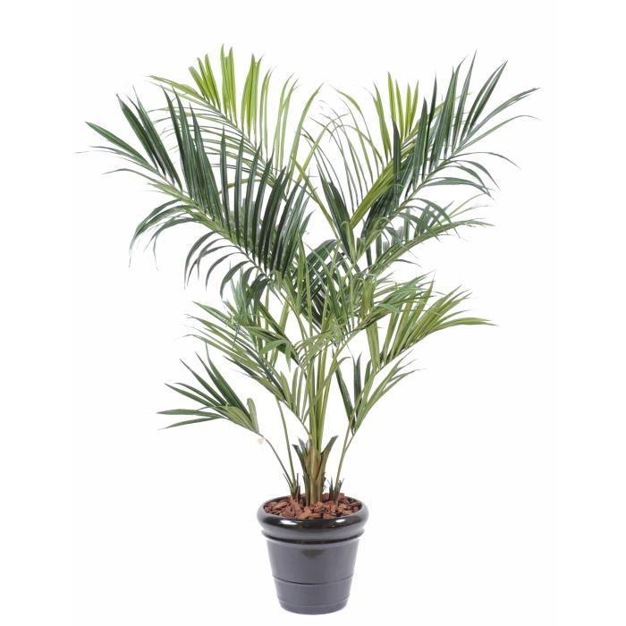 Comment entretenir un Kentia palmier d intrieur? - Jardinerie