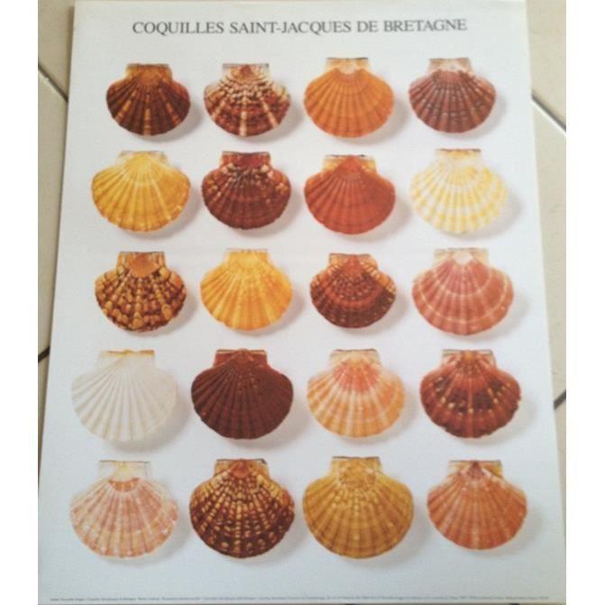 Affiche coquilles saint jacques de bretagne achat vente affiche cdiscount - Coquille saint jacques maison ...