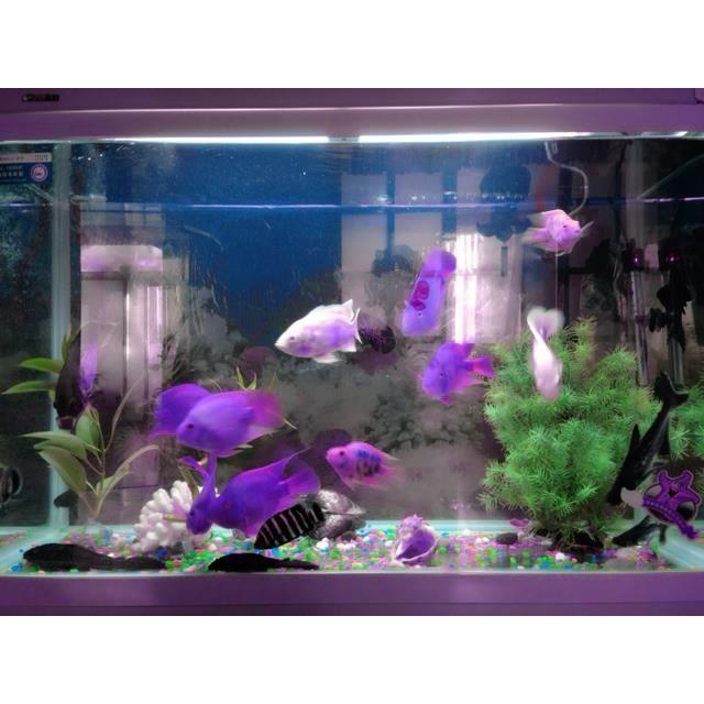 Lampe led deco aquarium telecommande 24 touches 48 leds 16 for Achat deco aquarium