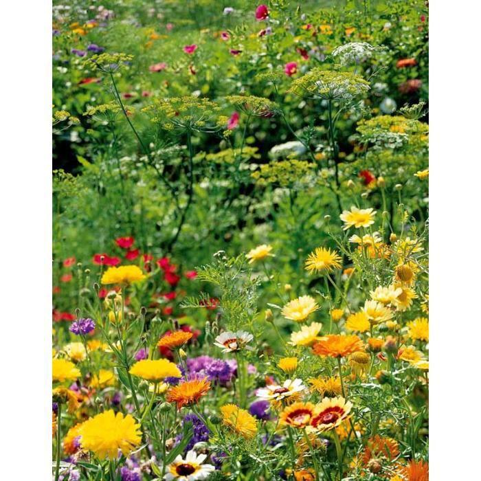 M lange de fleurs sp cial oiseaux achat vente graine for Achat de fleurs