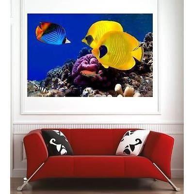 affiche poster d coration murale poissons r f 68832754 6 dimensions d clinaisons papier. Black Bedroom Furniture Sets. Home Design Ideas