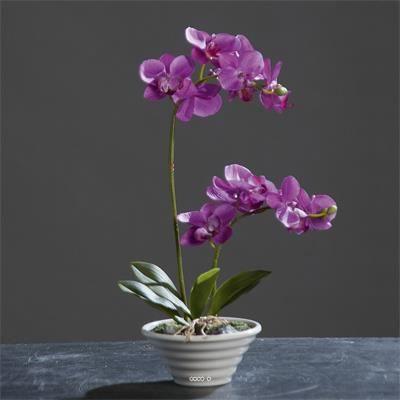 orchidee artificielle fushia 2 hampes en coupe plastique blanc h 35 cm achat vente fleur. Black Bedroom Furniture Sets. Home Design Ideas