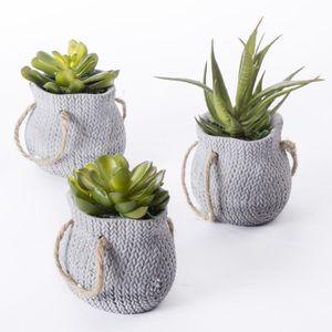 plantes composition florale achat vente plantes composition florale pas cher soldes. Black Bedroom Furniture Sets. Home Design Ideas