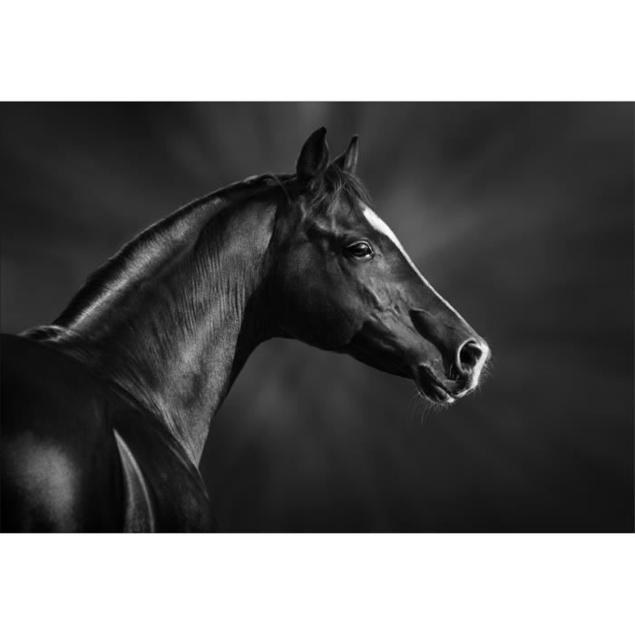 Stickers muraux d co cheval noir et blanc dimensions 20x29cm achat vente stickers vinyl - Stickers muraux noir et blanc ...