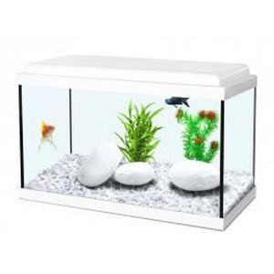 maison r aquarium l