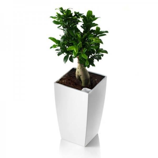 pot carr blanc avec r serve d 39 eau 35 cm algarve achat. Black Bedroom Furniture Sets. Home Design Ideas